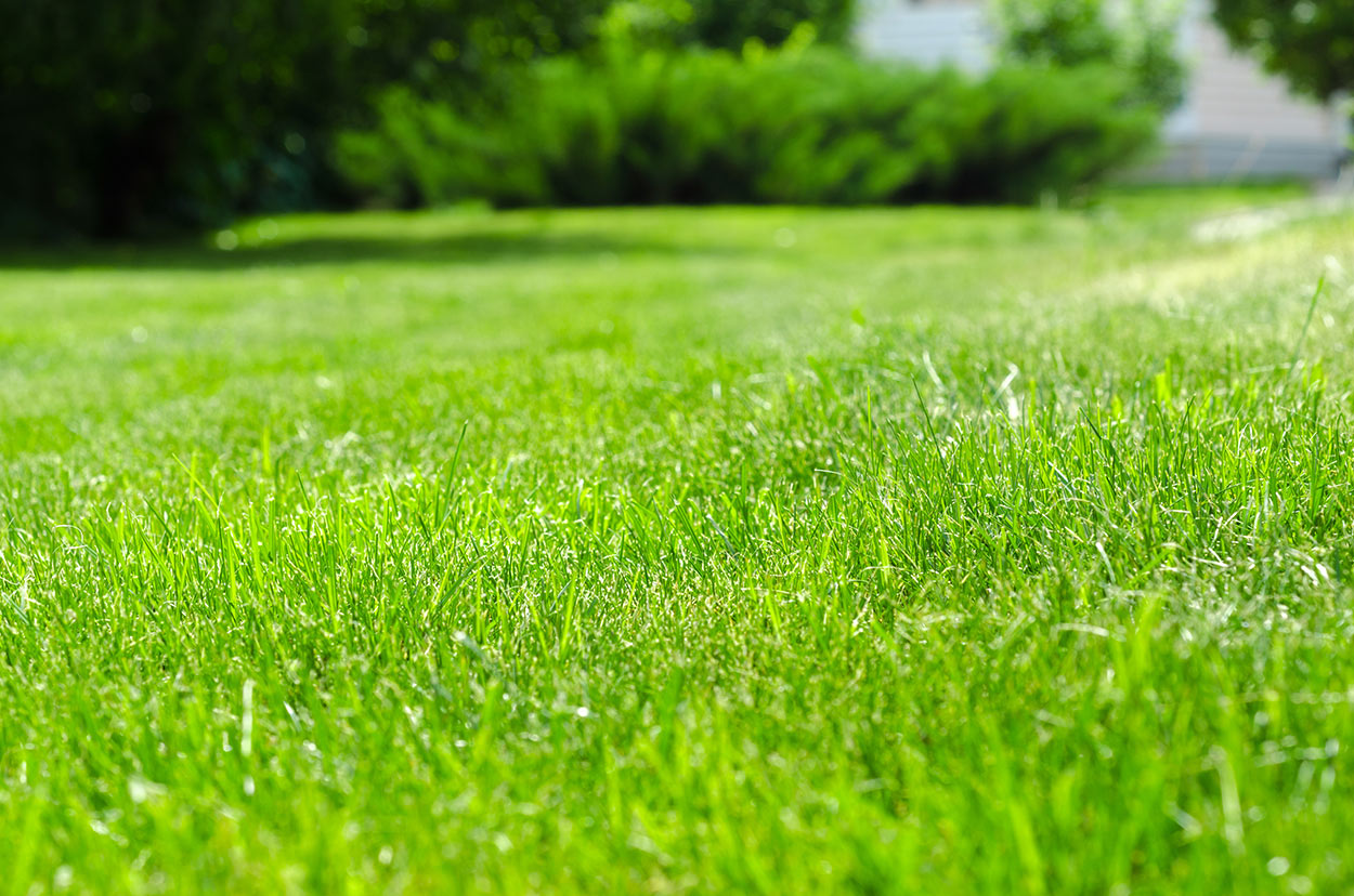 close up of a green lawn