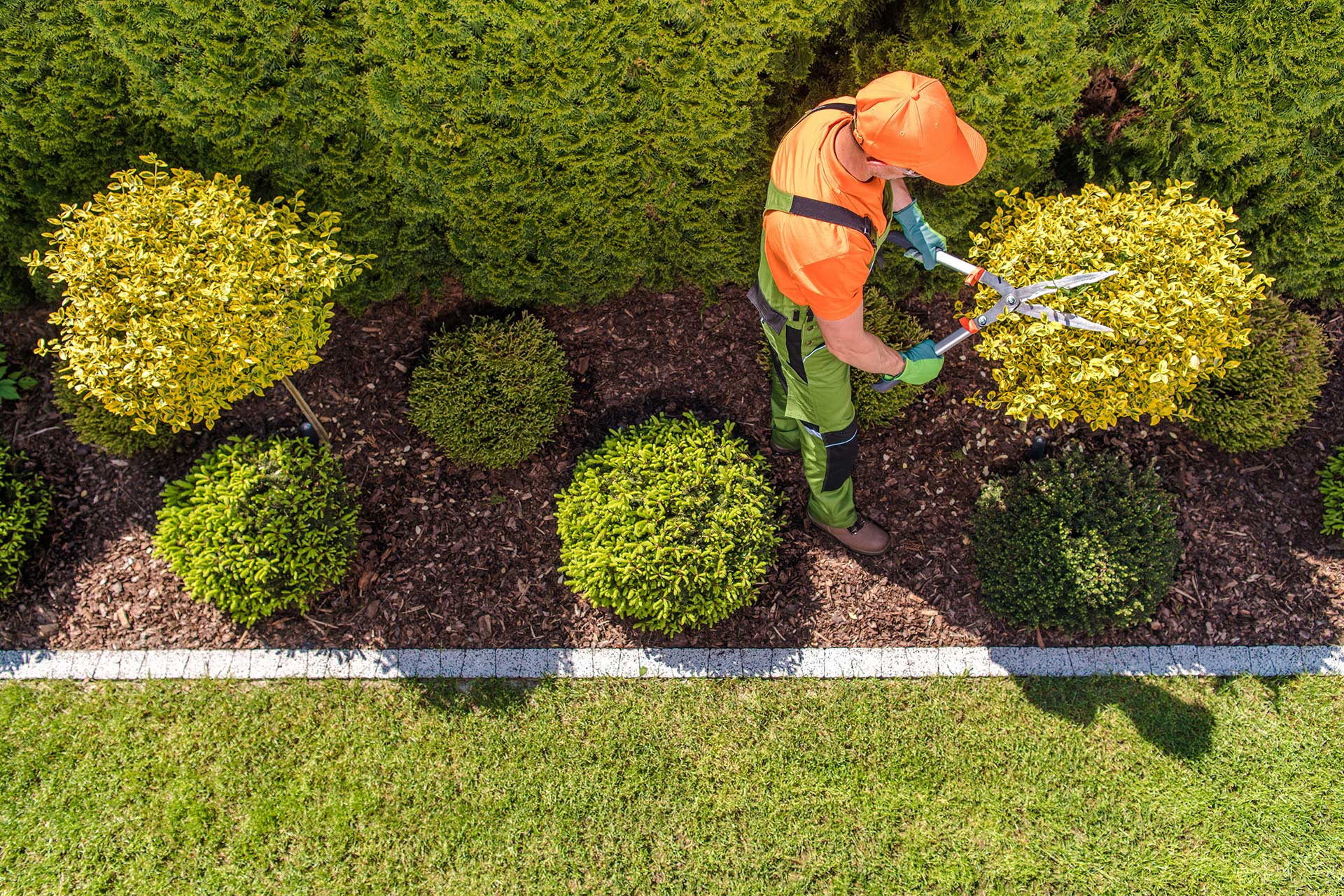 tech trimming shrubs