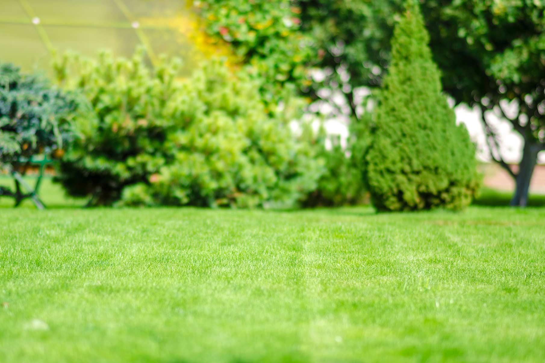 close up of a backyard lawn