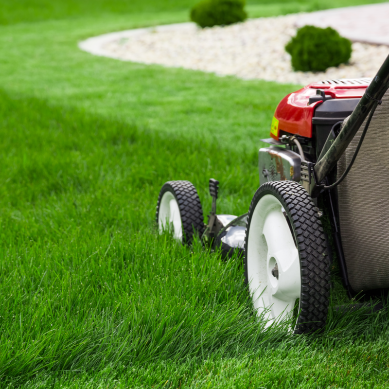 red mower cutting grass