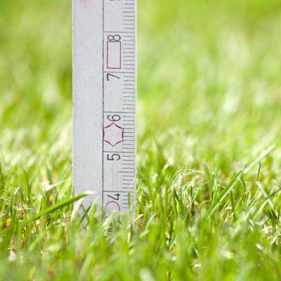 ruler showing grass height